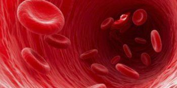 Los científicos ya saben hacer sangre